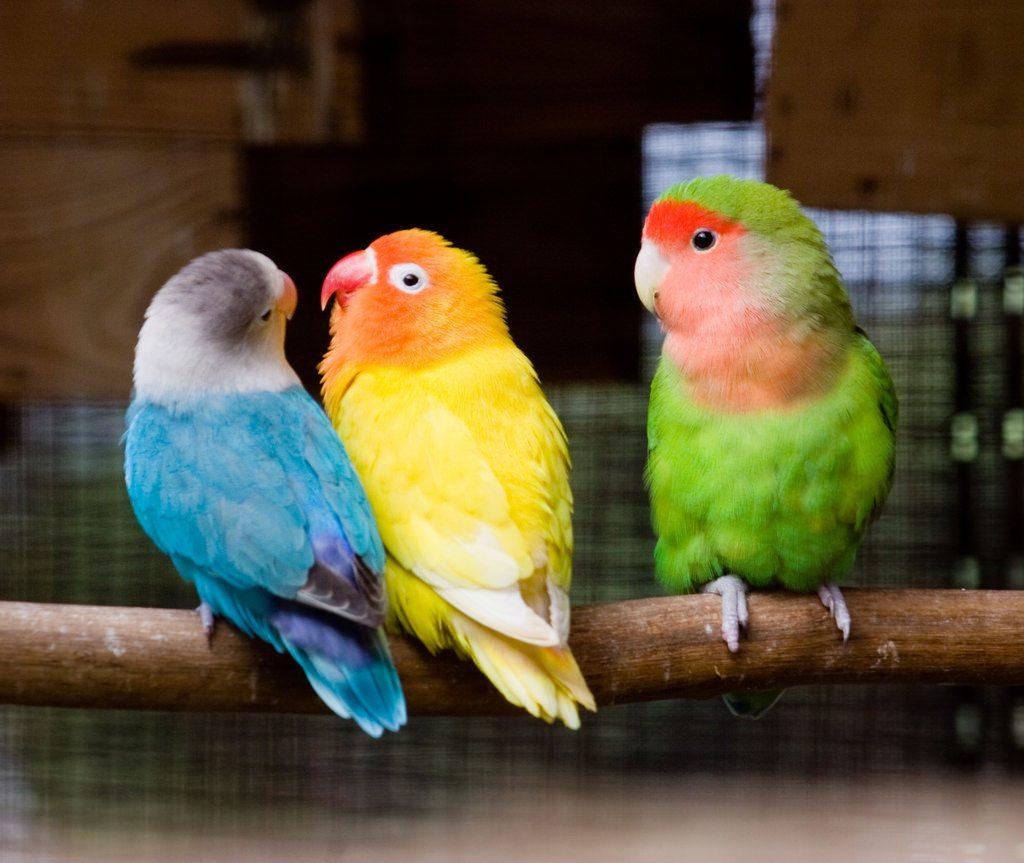 birds jealous